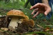 CAMMARATA – Raccolta funghi solo con la tessera del comune