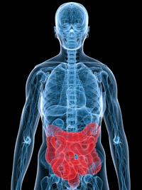 I batteri nella bocca peggiorano il cancro al colon