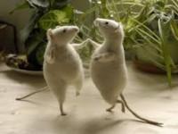 Muovetevi come i … topolini