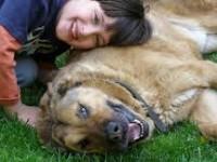 Accarezzare un cane rafforza la salute